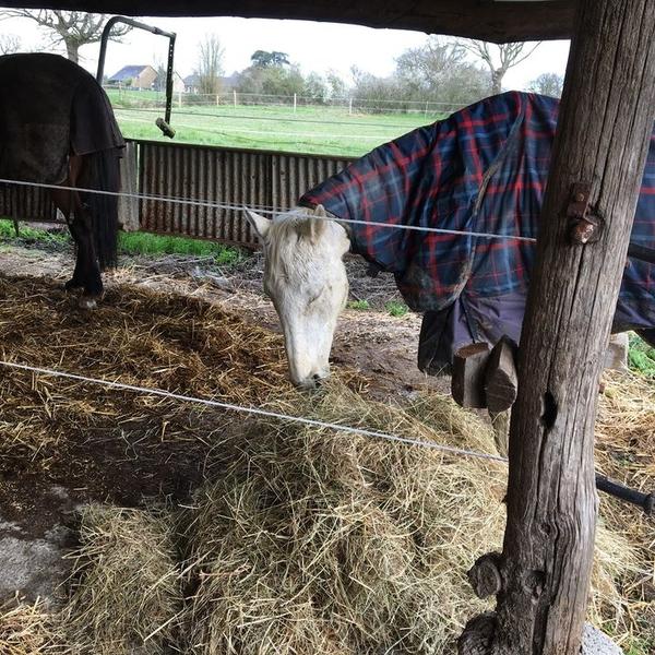 Pension et élevage d'animaux - Shunka Wakan à Ombrée d'Anjou